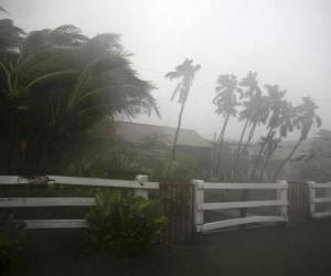 Tropical storm puzzle