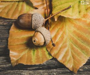 Two acorns and autumn leaves puzzle