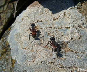 Two ants puzzle