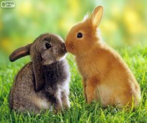 Two beautiful rabbits face to face puzzle