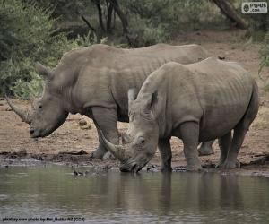 Two big white rhinos puzzle