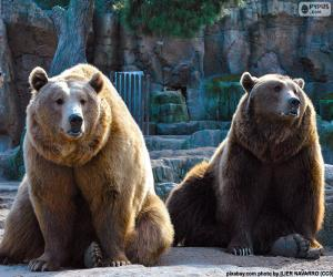 Two brown bears puzzle