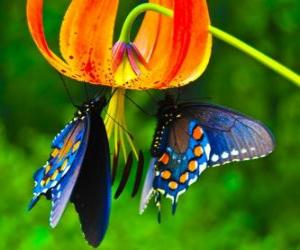 Two butterflies on a flower puzzle