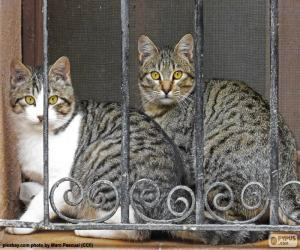 Two cats in a window puzzle