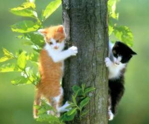 Two cats up a tree puzzle