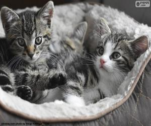 Two cute kittens puzzle