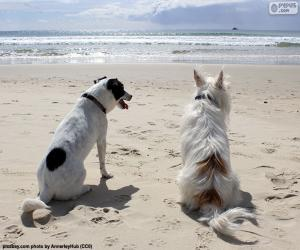 Two dogs on the beach puzzle