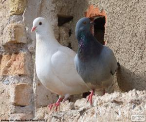 Two doves puzzle