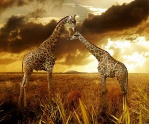 Two giraffes at dusk puzzle
