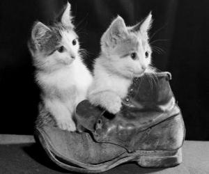 Two kittens on top of a boot puzzle