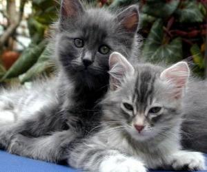 Two kittens resting puzzle