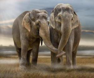 Two large elephants with intertwined trunks puzzle