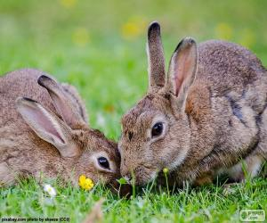 Two rabbits eating puzzle