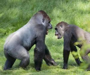 Two young gorillas walking on all fours puzzle