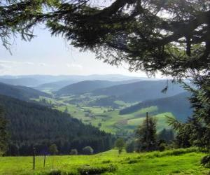 Valley in the Black Forest, Germany puzzle