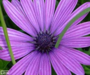 Violet flower puzzle