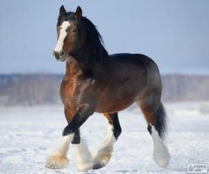 Vladimir Heavy Draft horse originating in Russia puzzle