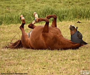 Wallowing horse puzzle