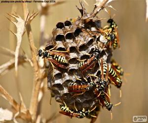 Wasp swarm puzzle