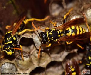 Wasps puzzle