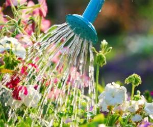 Watering flowers puzzle