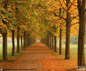 Way among trees in autumn puzzle