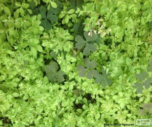 Weeds puzzle