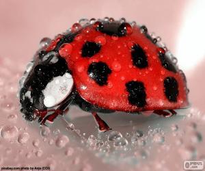 Wet Ladybug puzzle