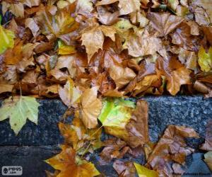 Wet leaves puzzle