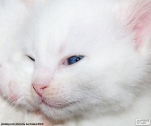 White cat face puzzle