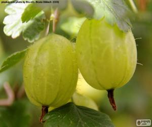 White gooseberries puzzle