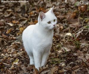 White kitten puzzle