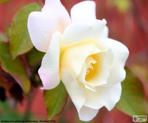 White Rose puzzle