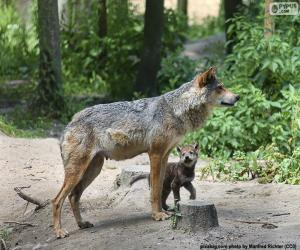 Wolf and breeding puzzle