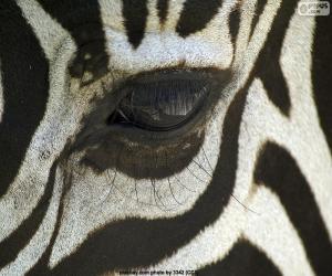 Zebra eye puzzle