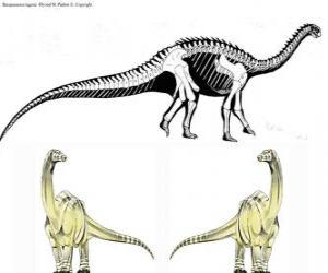 Zizhongosaurus is a genus of basal herbivorous sauropod dinosaur which lived in the Early Jurassic Period of China. puzzle