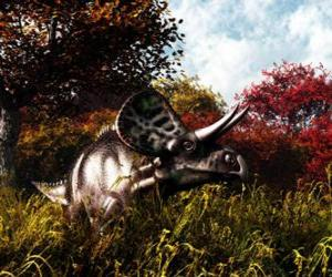 Zuniceratops was about 3 to 3.5 meters long (10 a 11 ft) and 1 meter (3 ft) high. puzzle