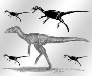 Zuolong who lived in the late Jurassic period ...