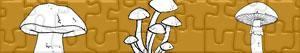 puzzles Mushrooms