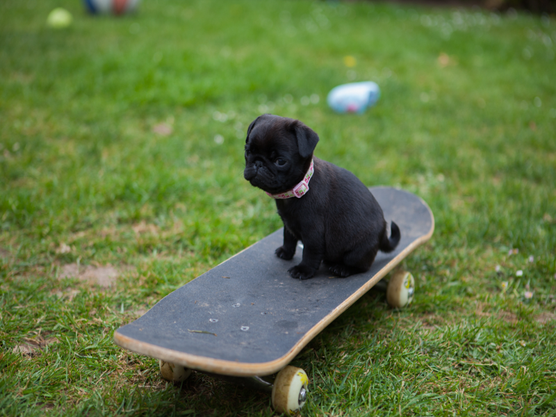 dog on a skateboard puzzle