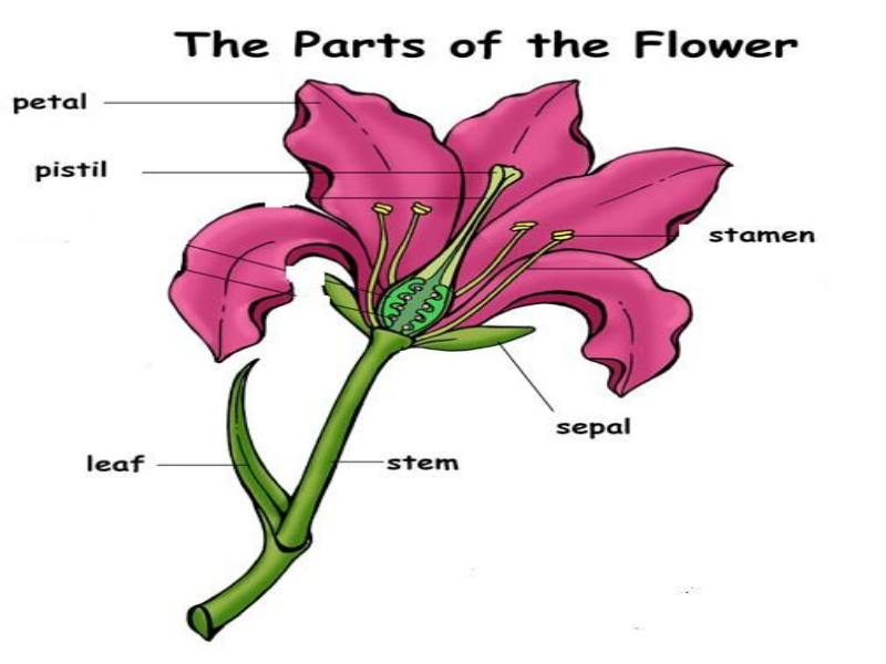 Parts of a flower puzzle